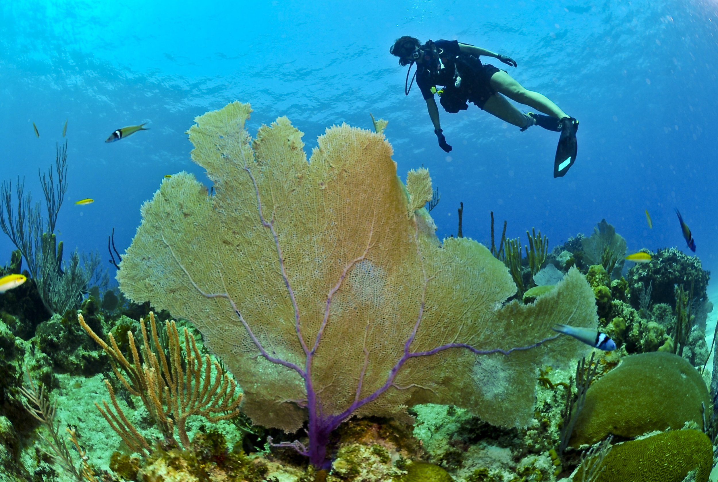 diver-huge-coral-underwater-pixabay.jpg