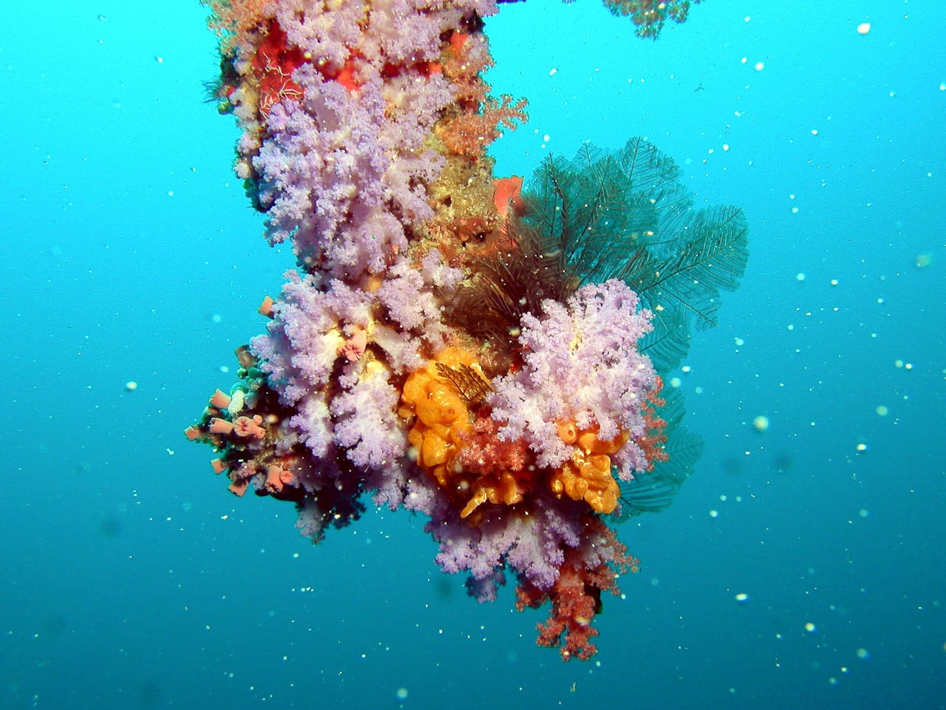 maldives-giusti596-maldives-underwater-coral.jpg