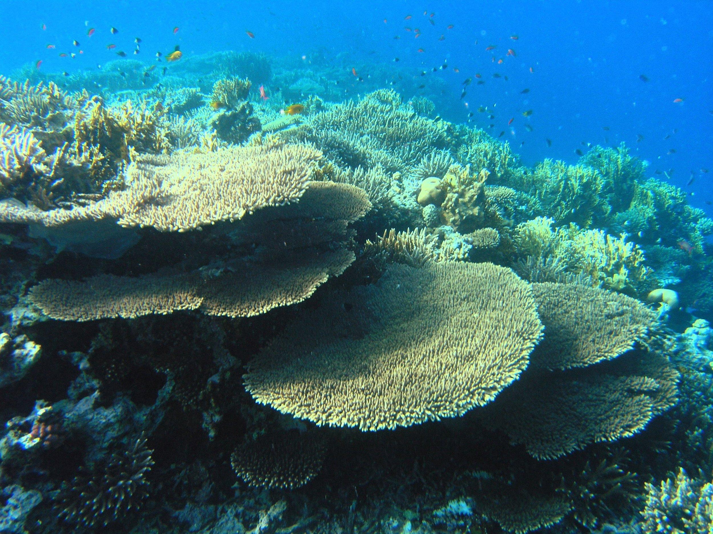 sea-coral underwater.jpg
