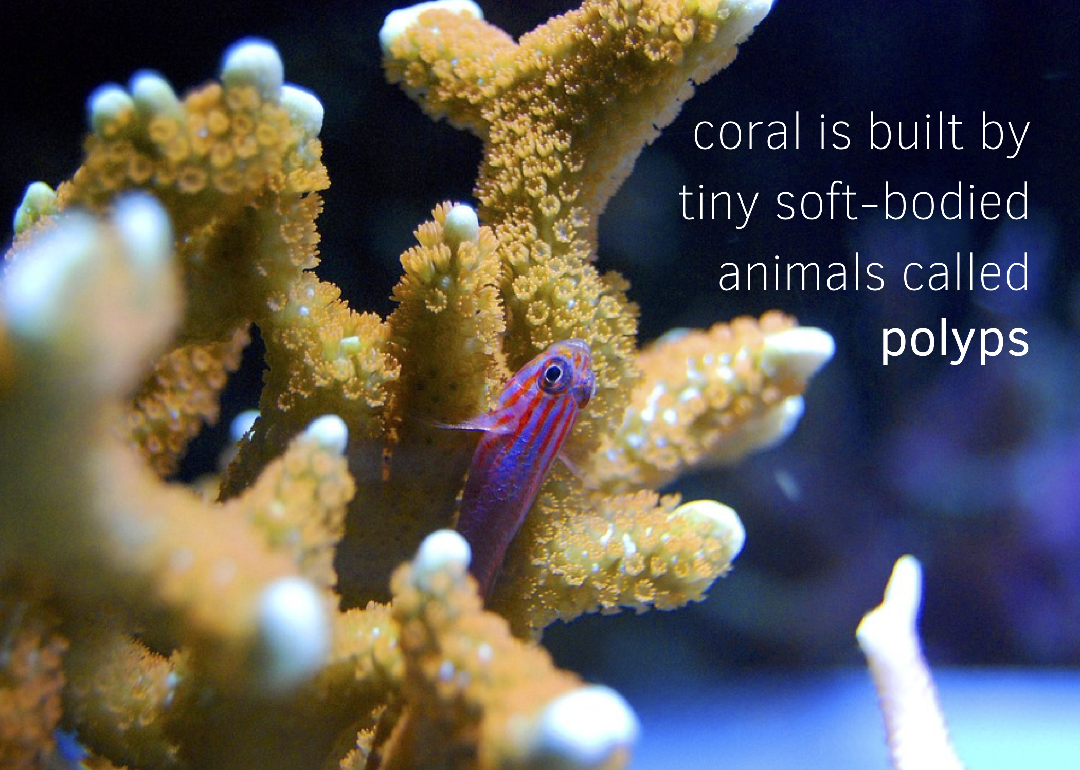 coral-postcard-harken-derm-what-are-coral-polyps-front.png