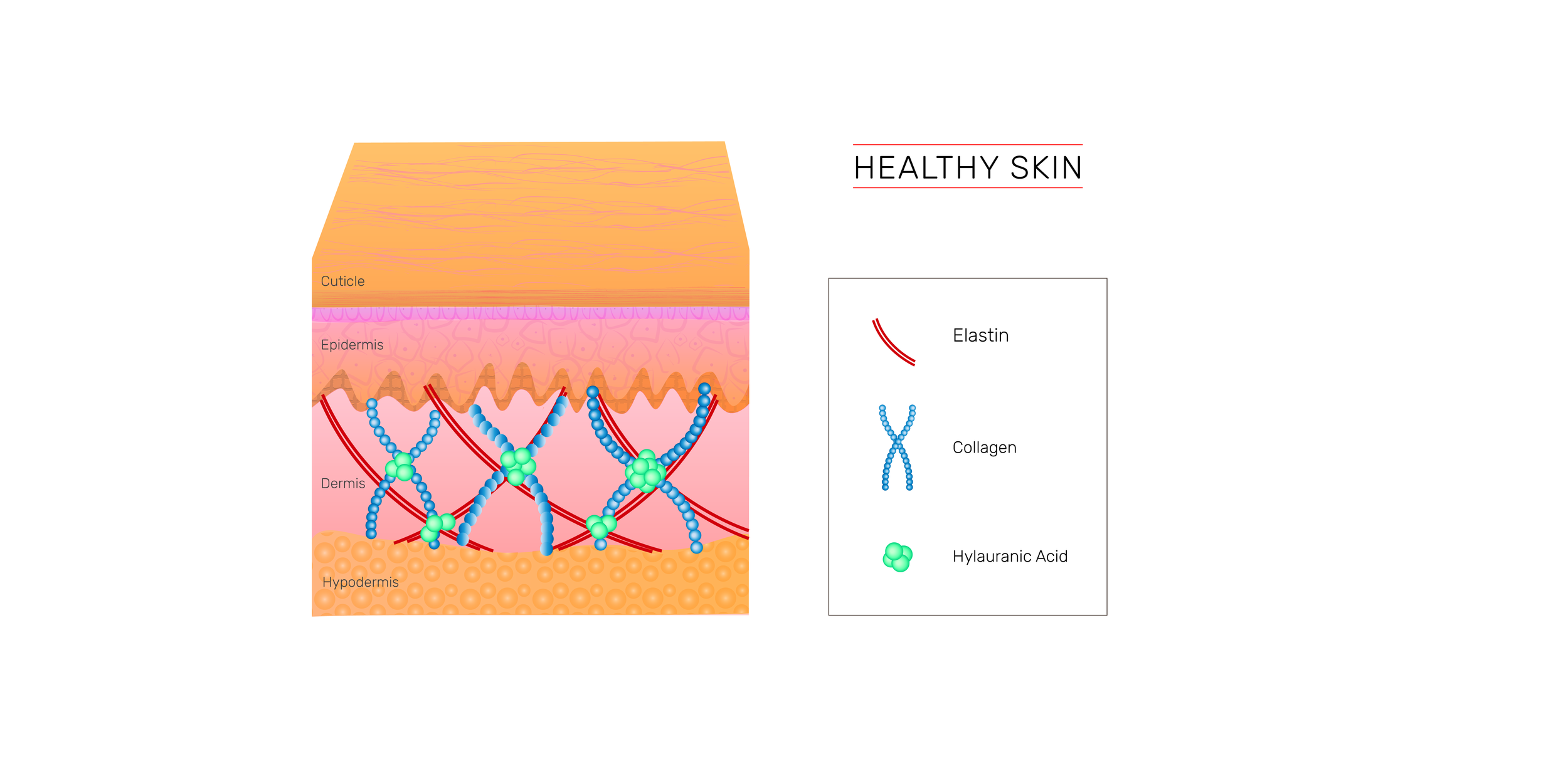HEALTHY SKIN DIAGRAM-04.png
