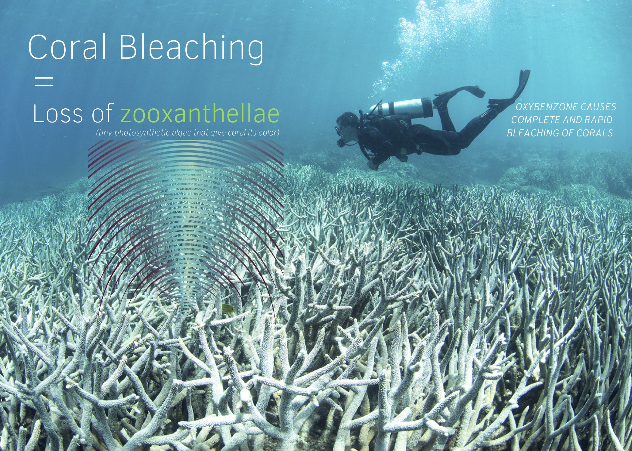 coral postcard-harken derm-coral bleaching-loss of zooxanthellae-front.jpg