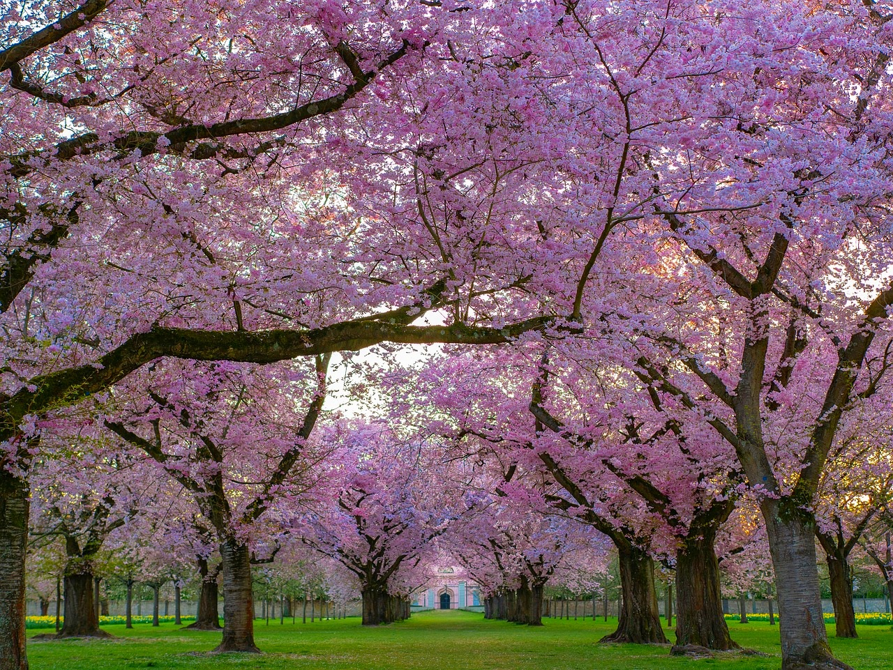 trees-4092265_1280.jpg