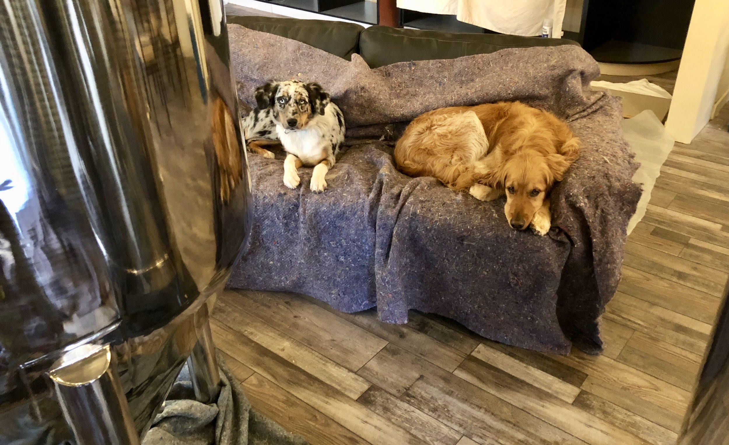 Brew dogs testing out taproom sofa