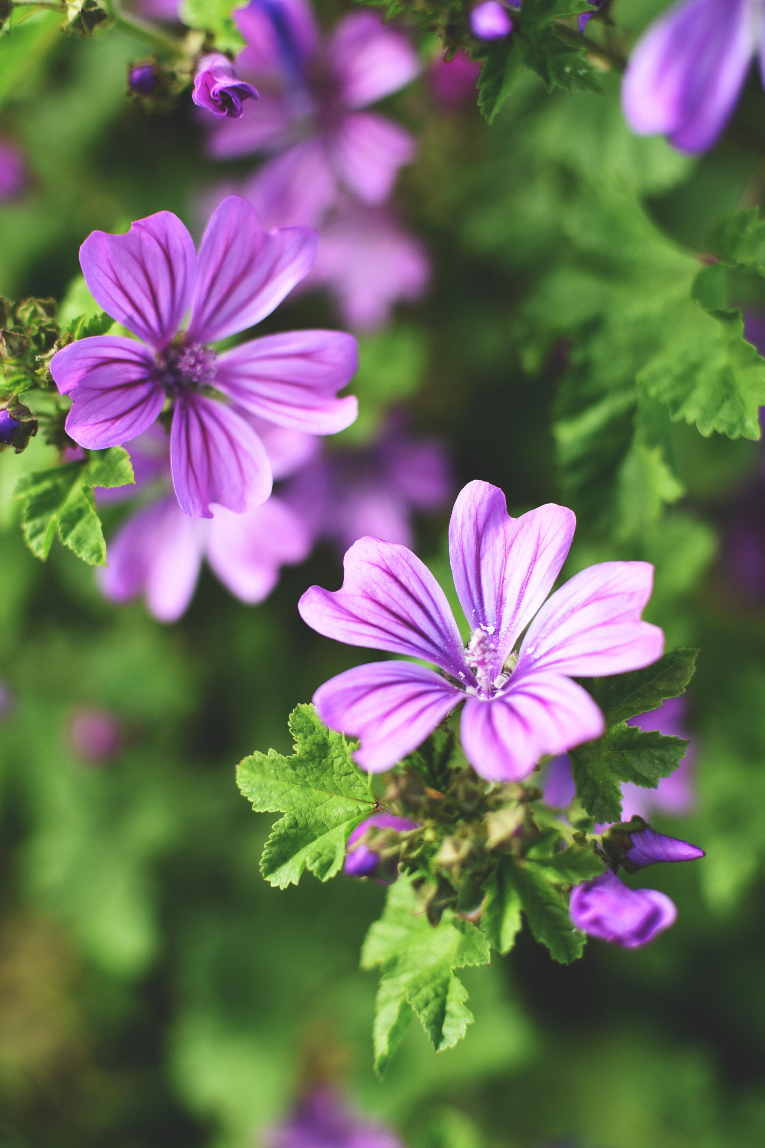 Paniers bio-Mauve jardin - Clotilde.jpg