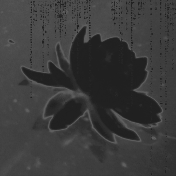 """Black Water Lily  : altered photograph - pigment ink on archival paper : edition of 10 : 22""""h x 22""""w"""