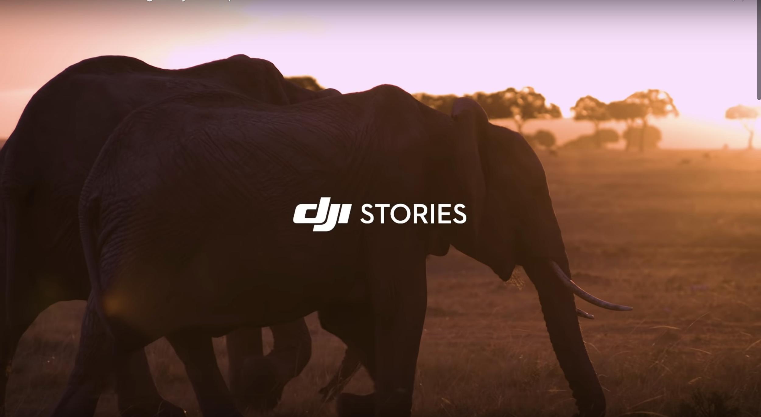 DJI Drones Elephant Poaching