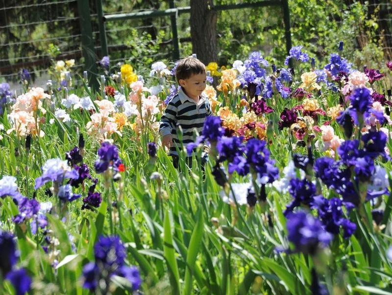 Kids love the Hondo Iris Farm