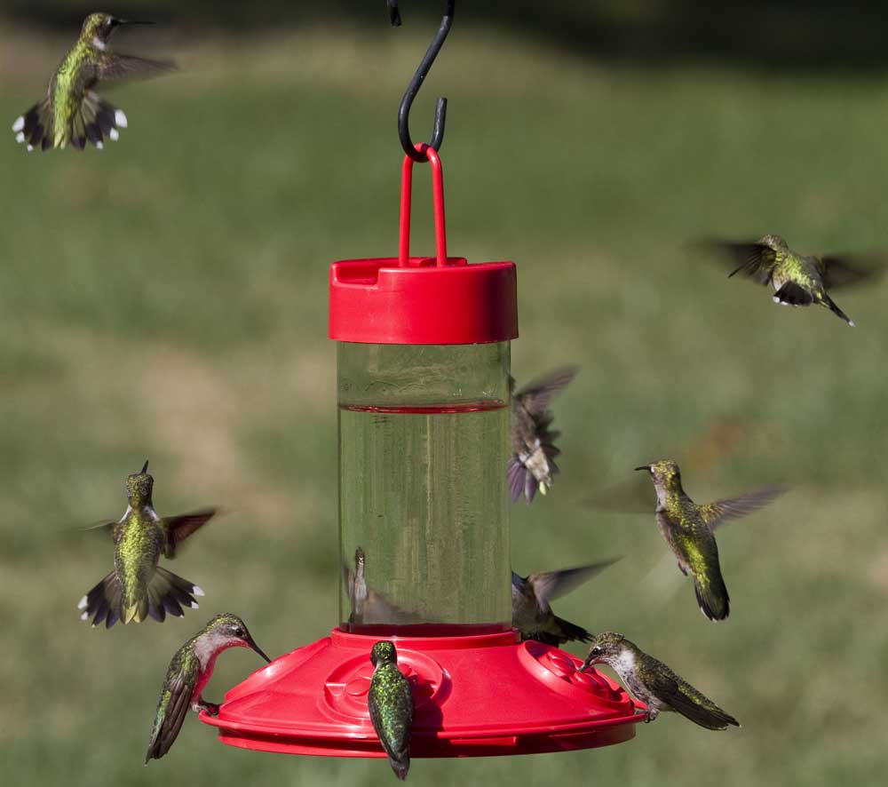 PHOTO: Hummingbirds