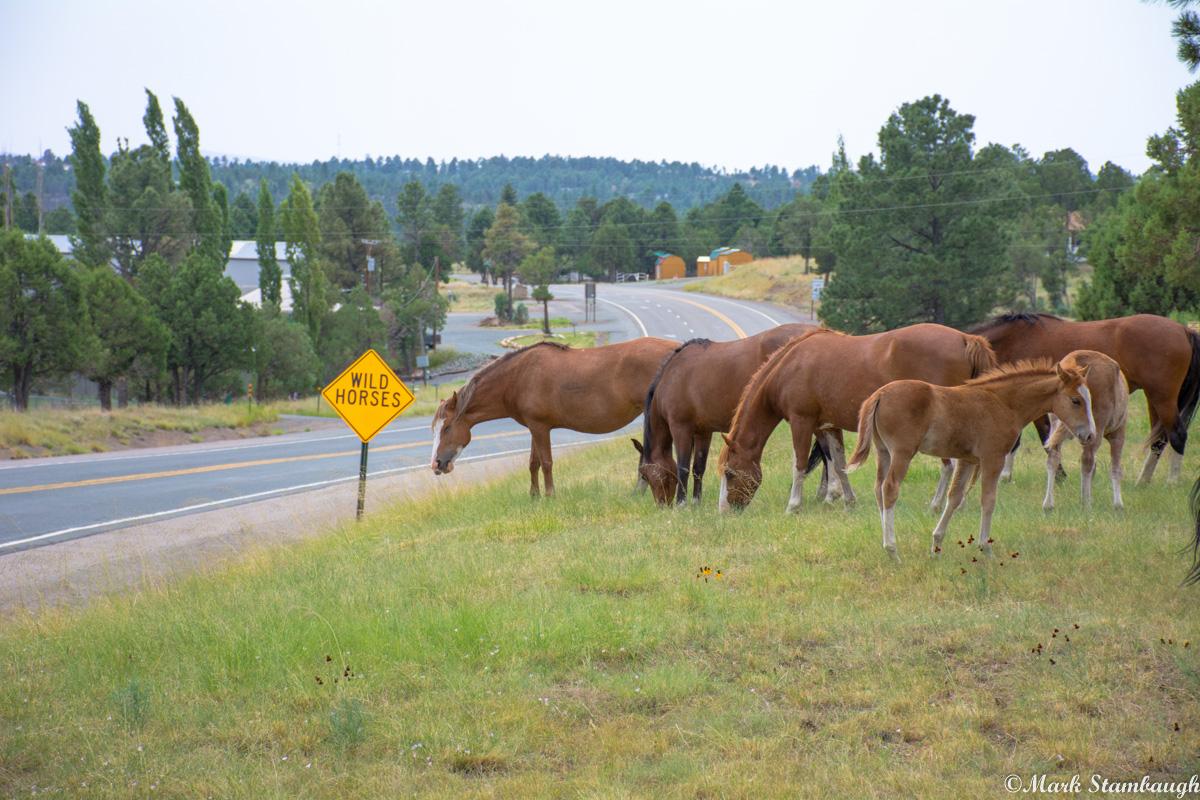 PHOTO: Wild Horses