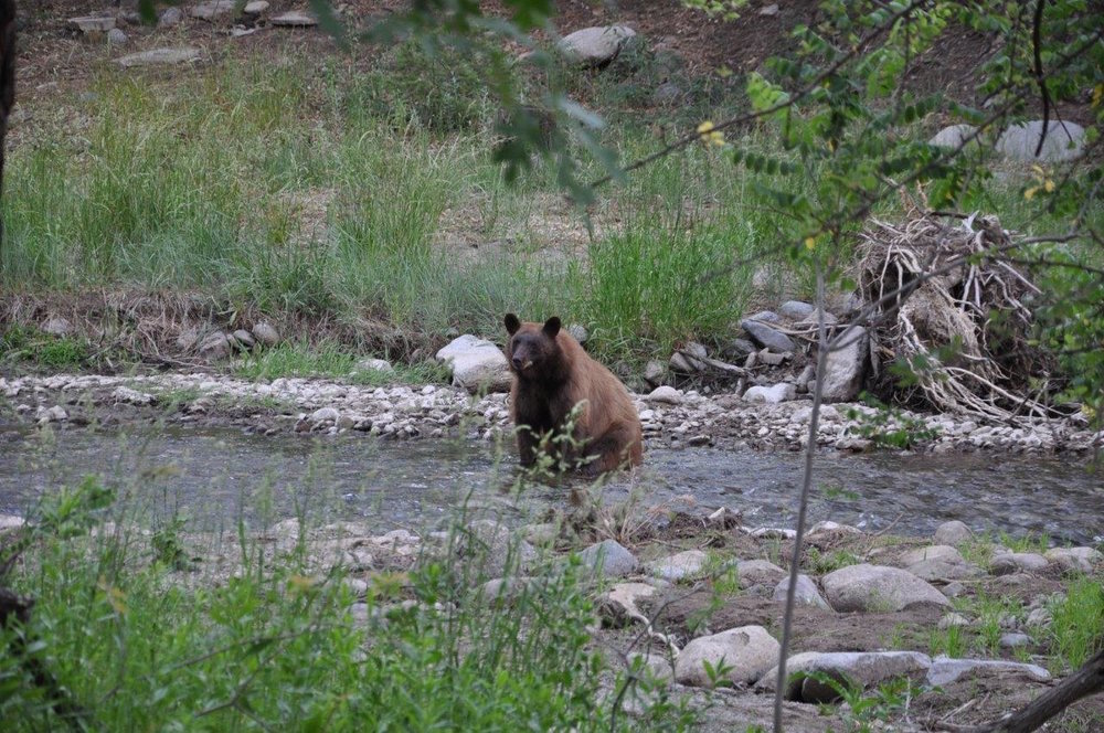 PHOTO: Bear in river