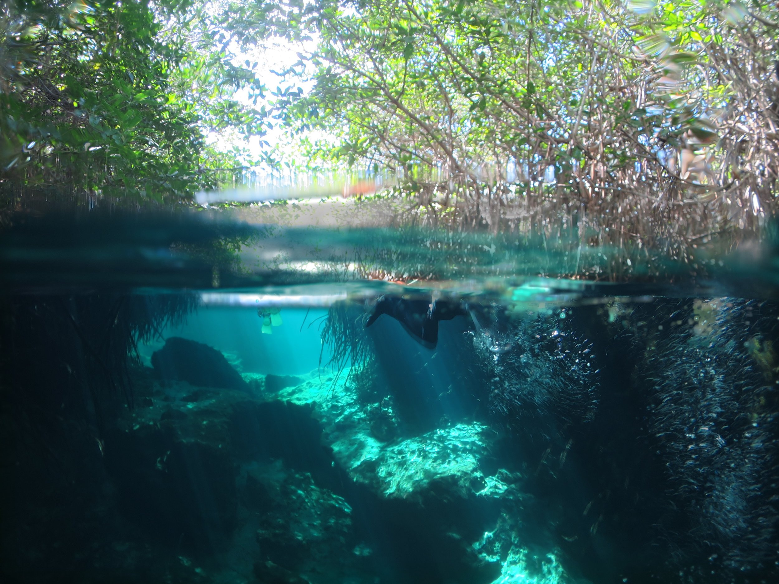Cenote fun.jpg