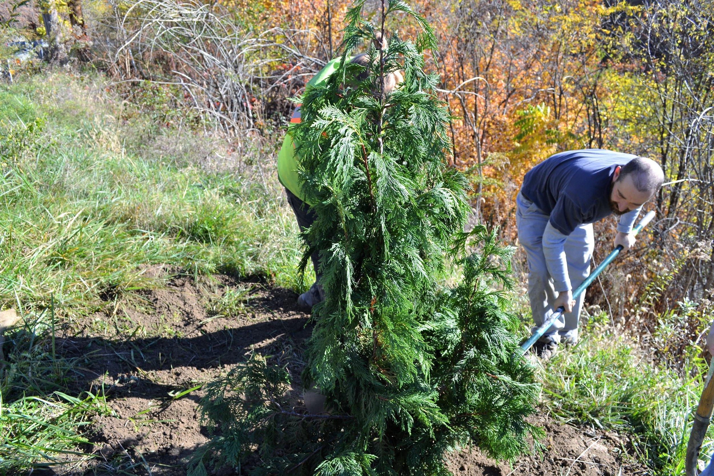 2016-11-05 Tree Planting Day (27).JPG