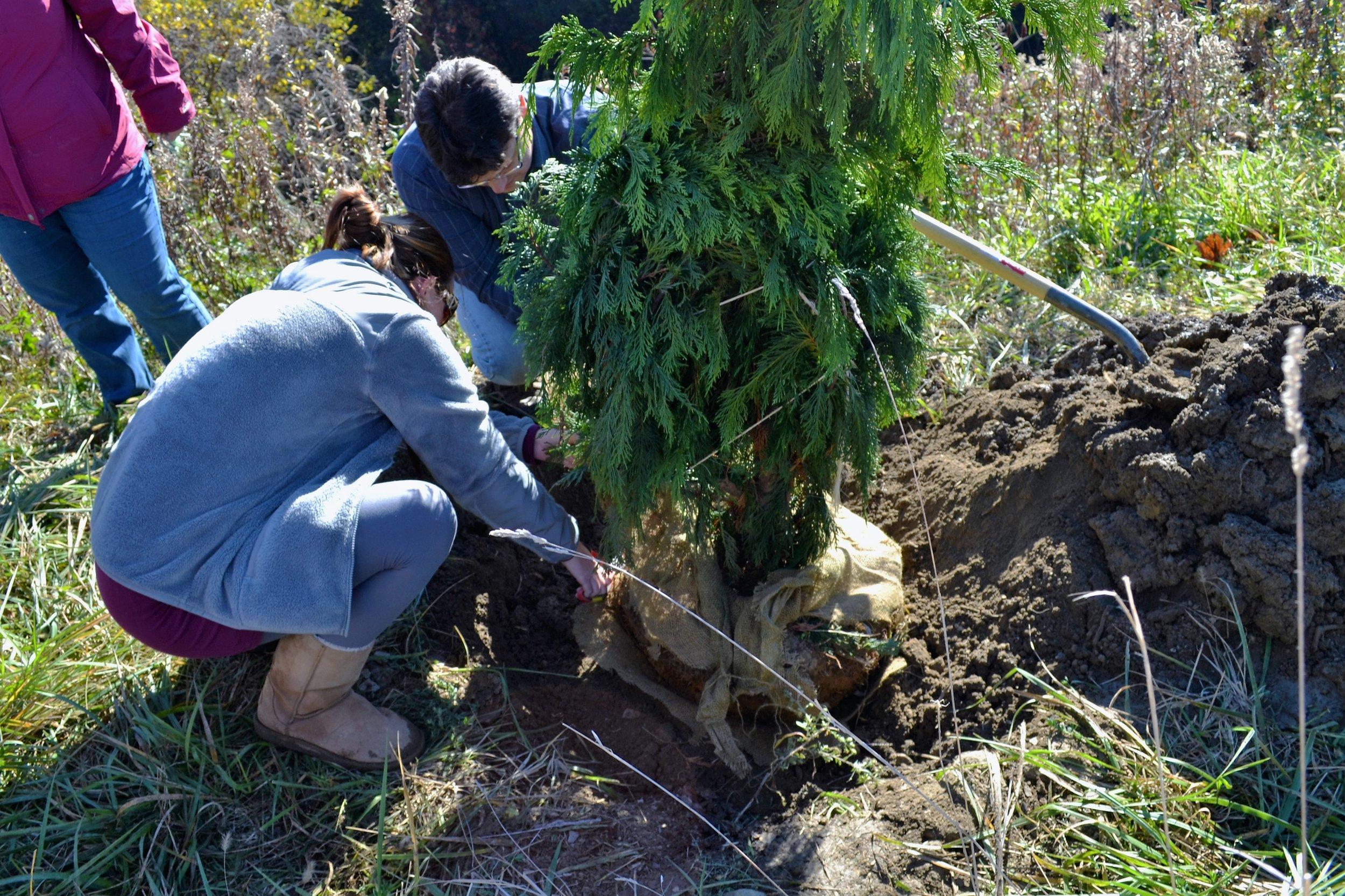 2016-11-05 Tree Planting Day (36).JPG