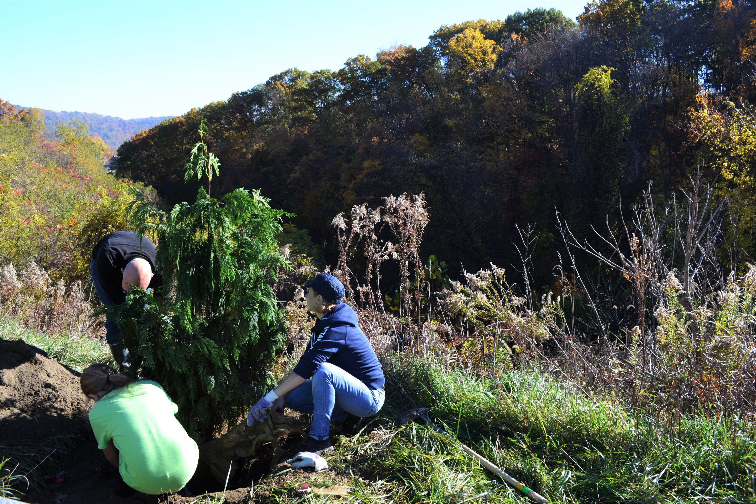 2016-11-05 Tree Planting Day (49).JPG