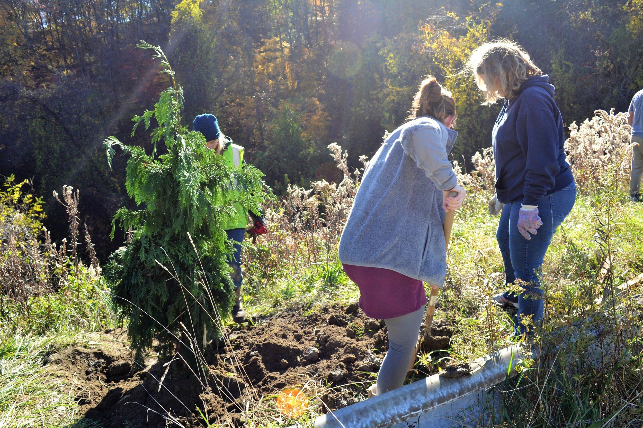 2016-11-05 Tree Planting Day (63).JPG