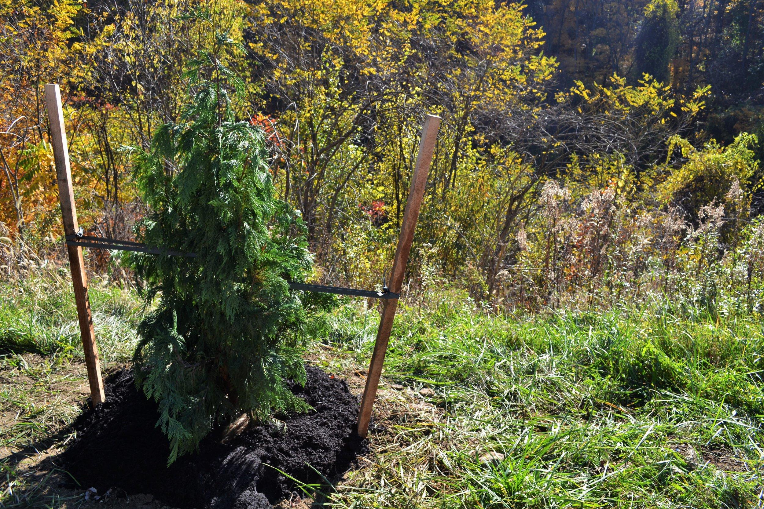 2016-11-05 Tree Planting Day (64b).jpg