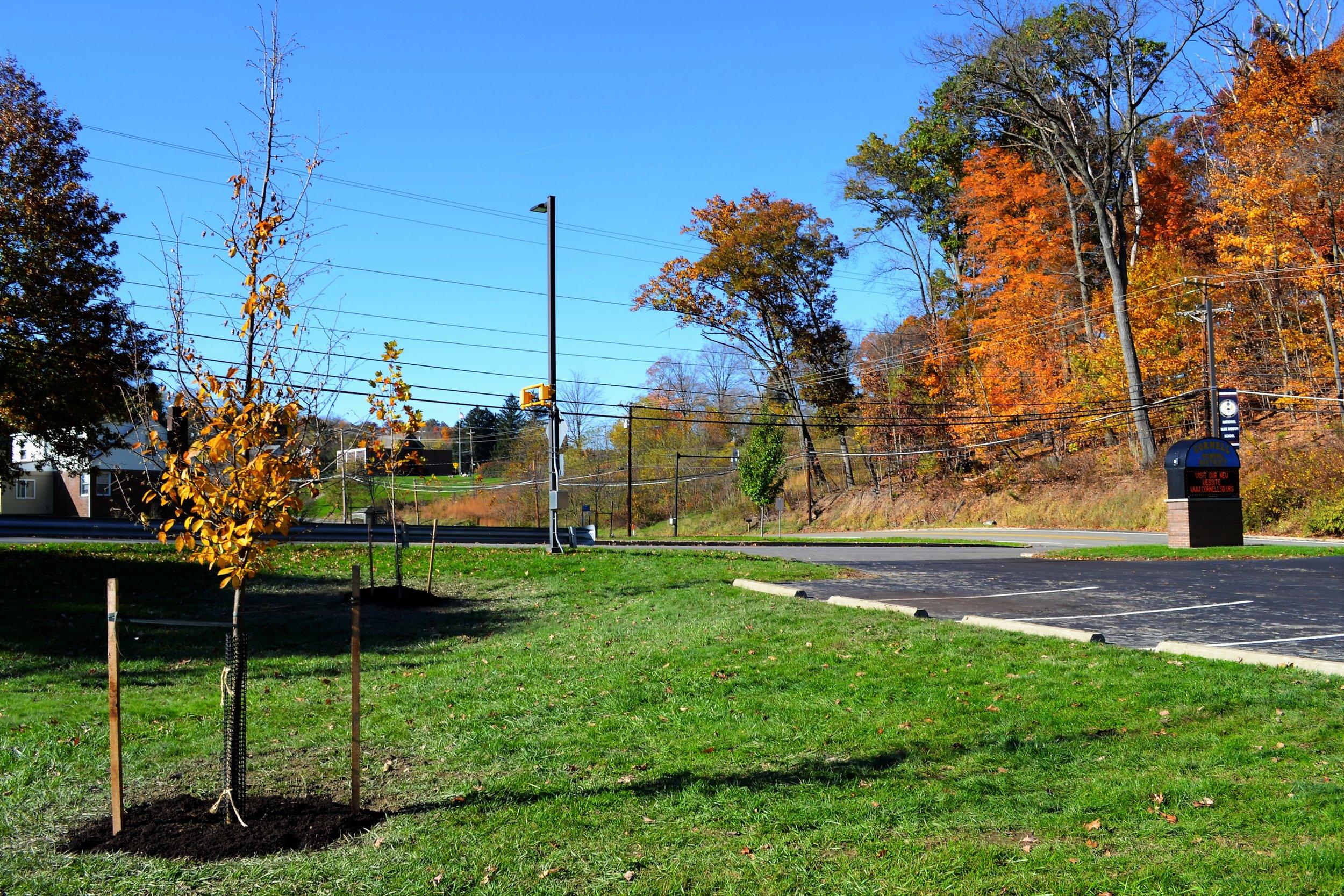 2016-11-05 Tree Planting Day (98).JPG