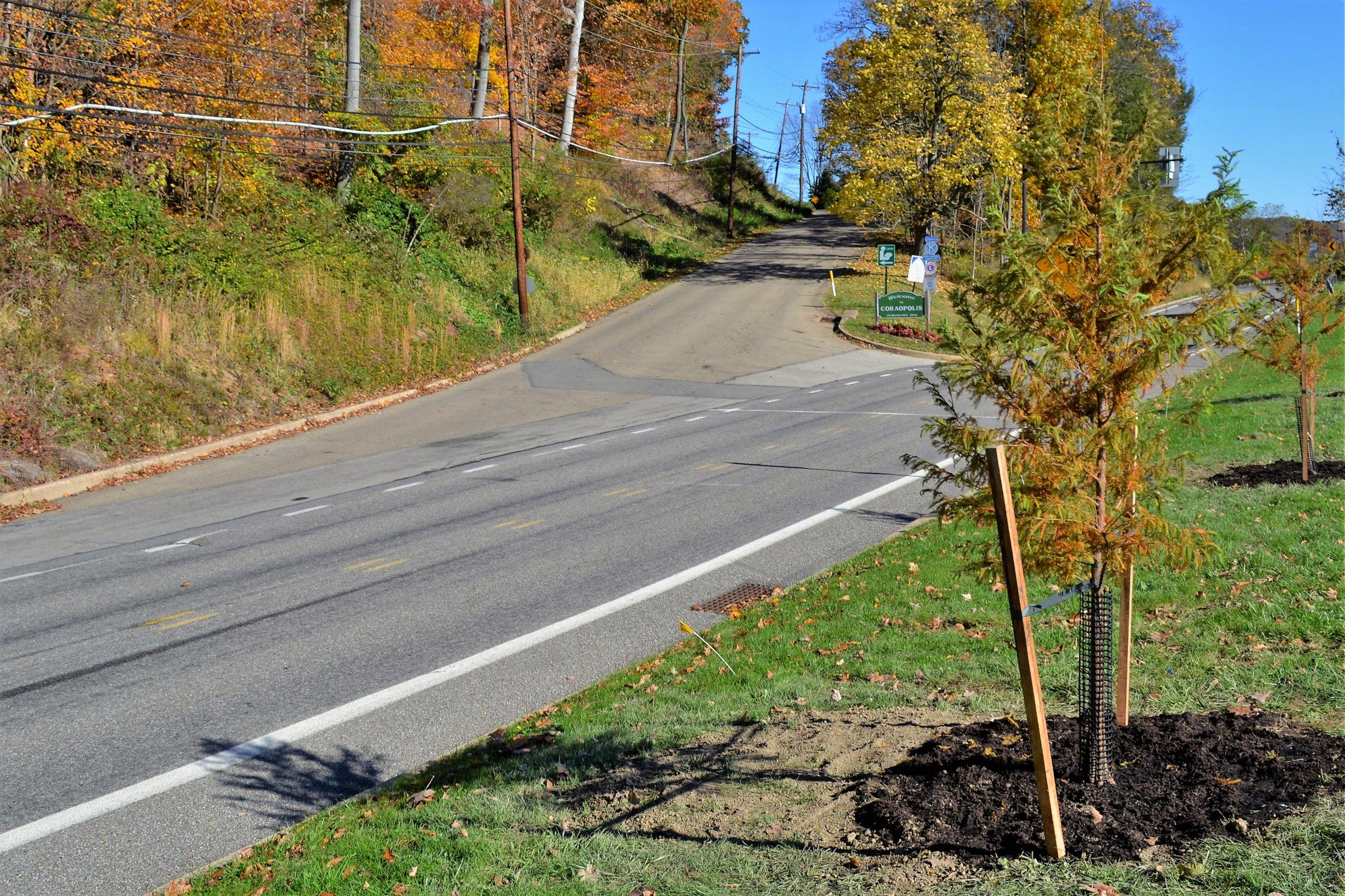 2016-11-05 Tree Planting Day (121).JPG