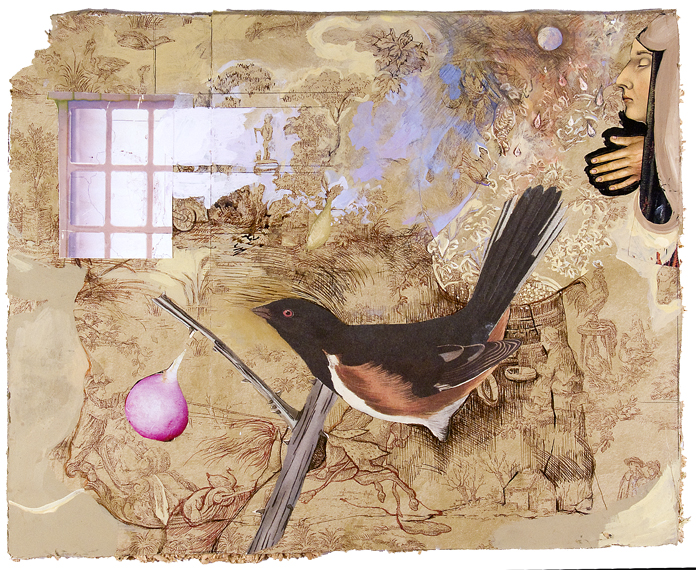 Bird And Window