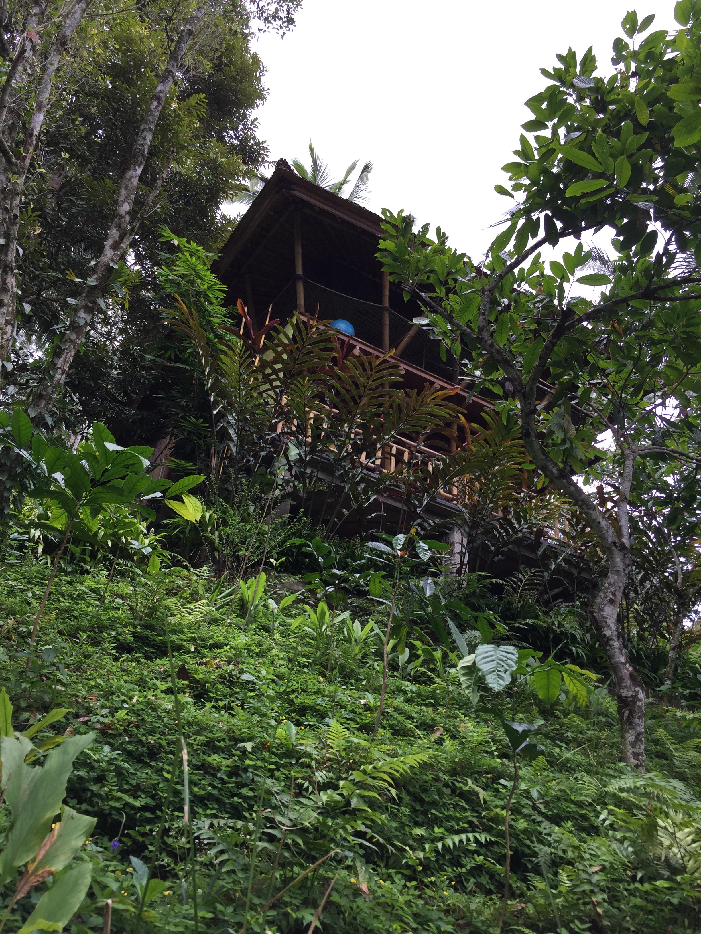 Treehouse elevation.jpg