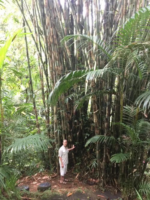 Craig+Bamboo.png