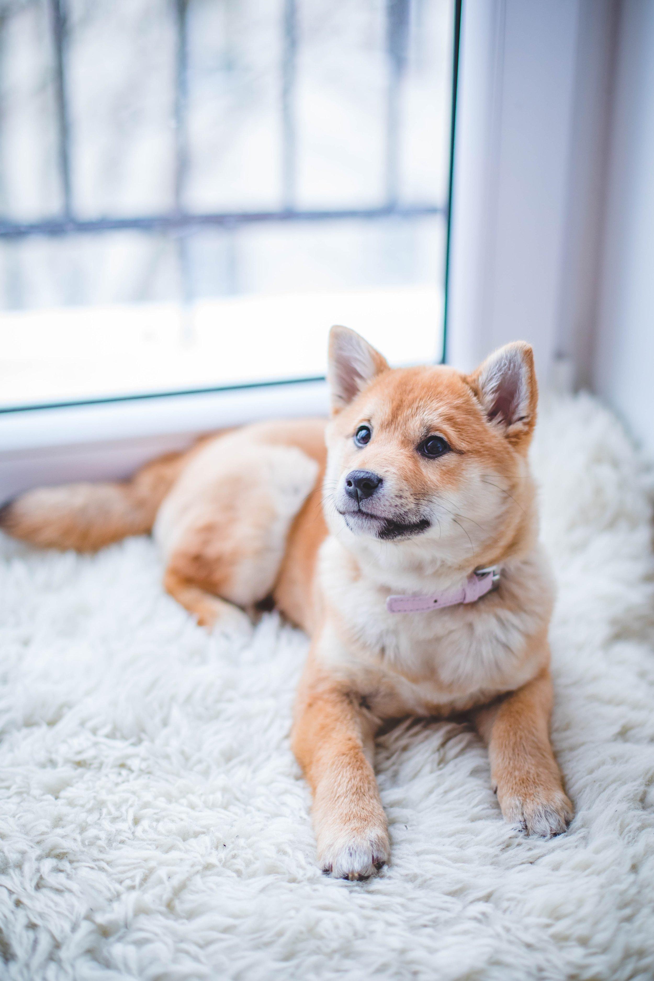 Dog on Carpet.jpg