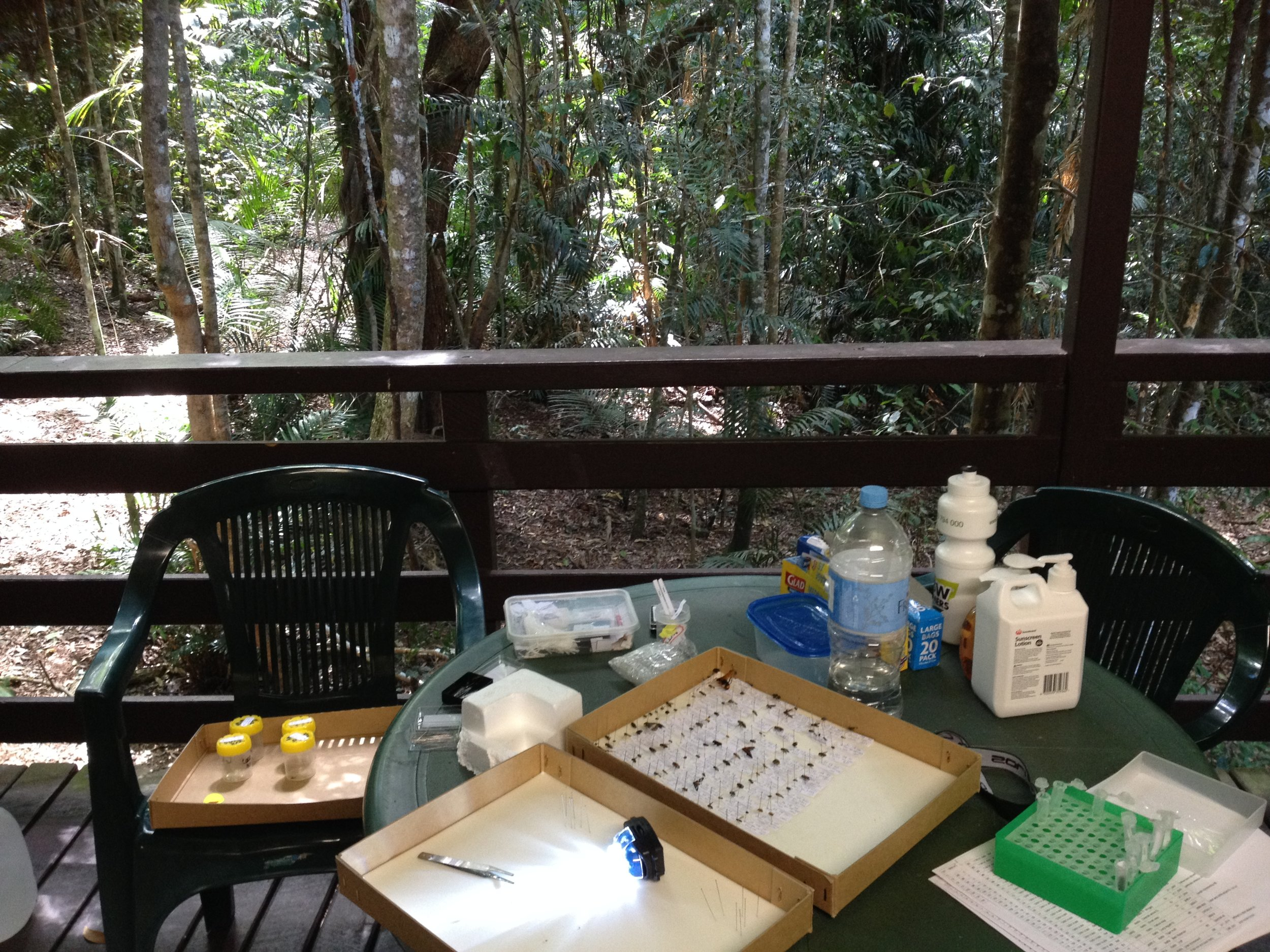 Pinning insects is all in a day's work