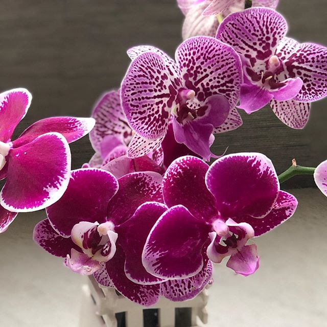 Orchid 💕