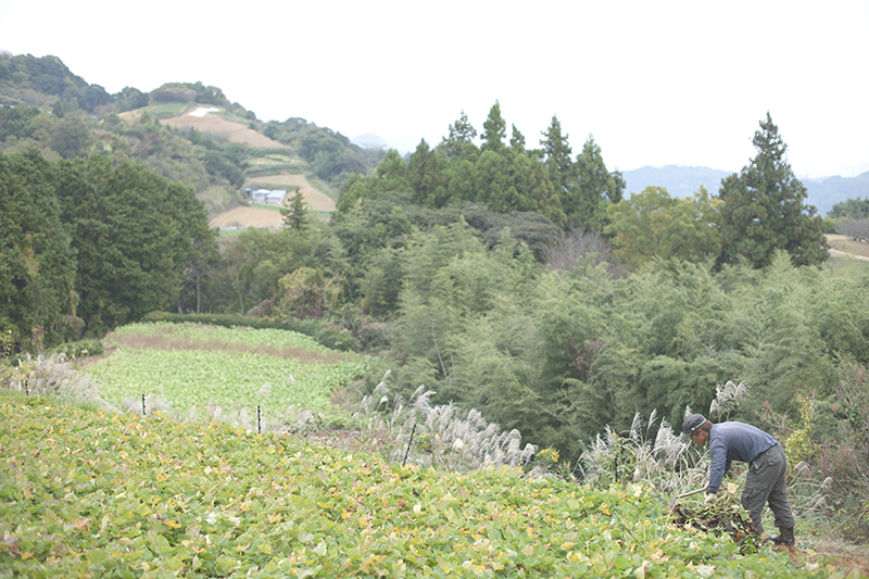 有機JAS認定の山の畑