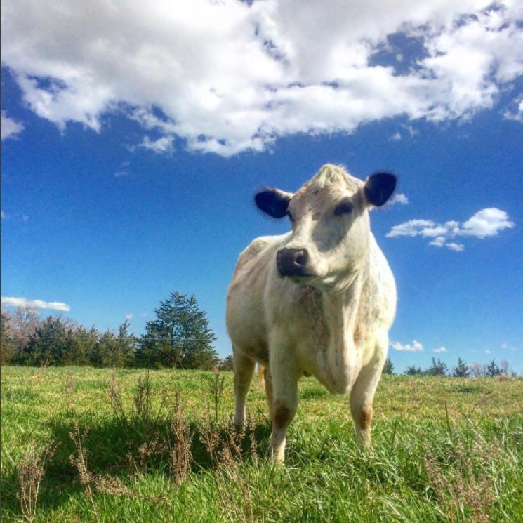 Free Union Grass Farm
