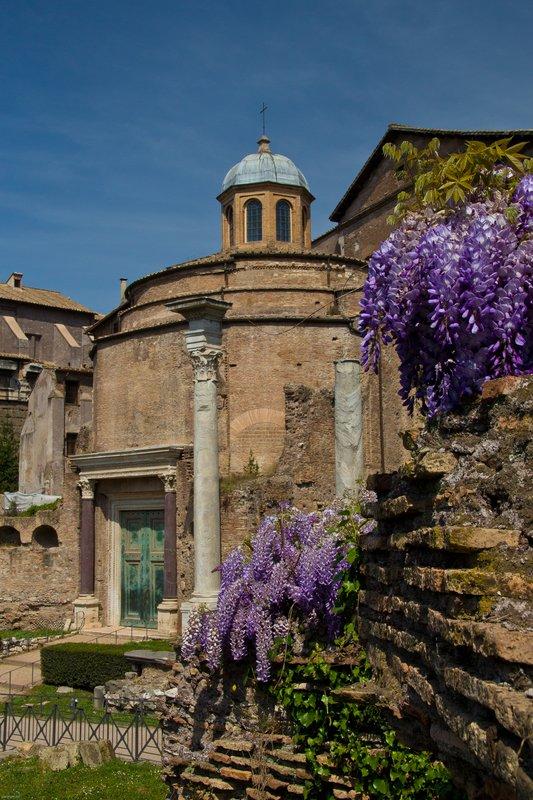 Wisteria in the Roman Forum.[ Source ]