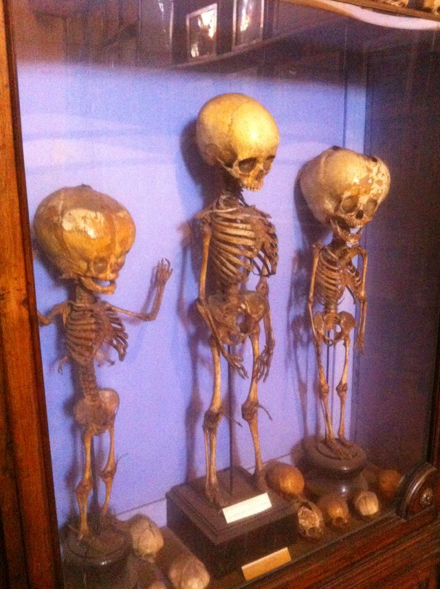 Exhibit of child skeletons, Museo dell'Arte Sanitaria, Roma [ source ]