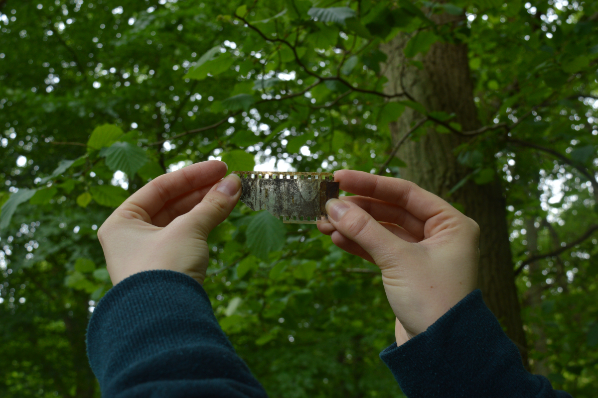 Discarded camera film found in local woodlands