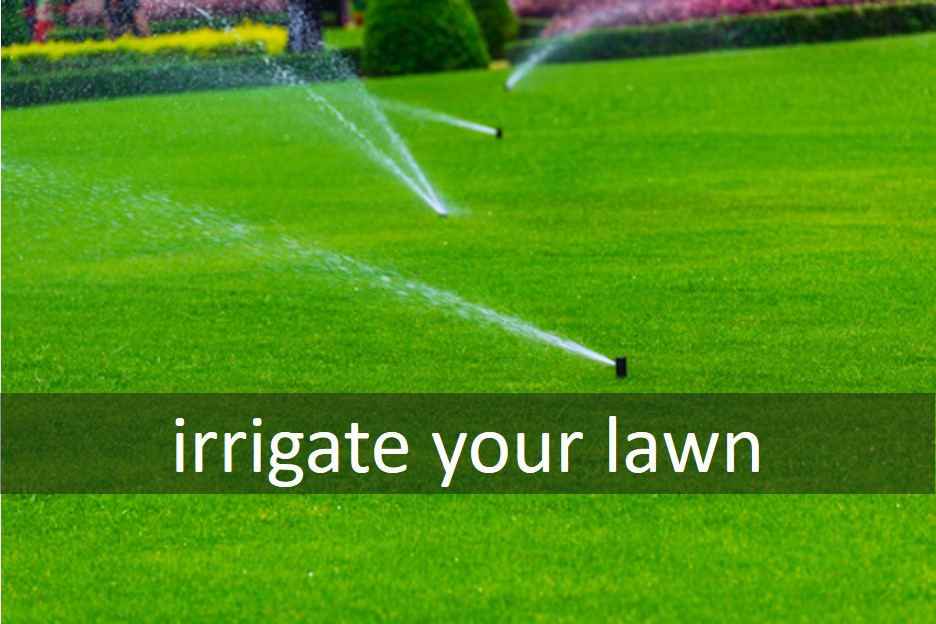 Irrigate your lawn