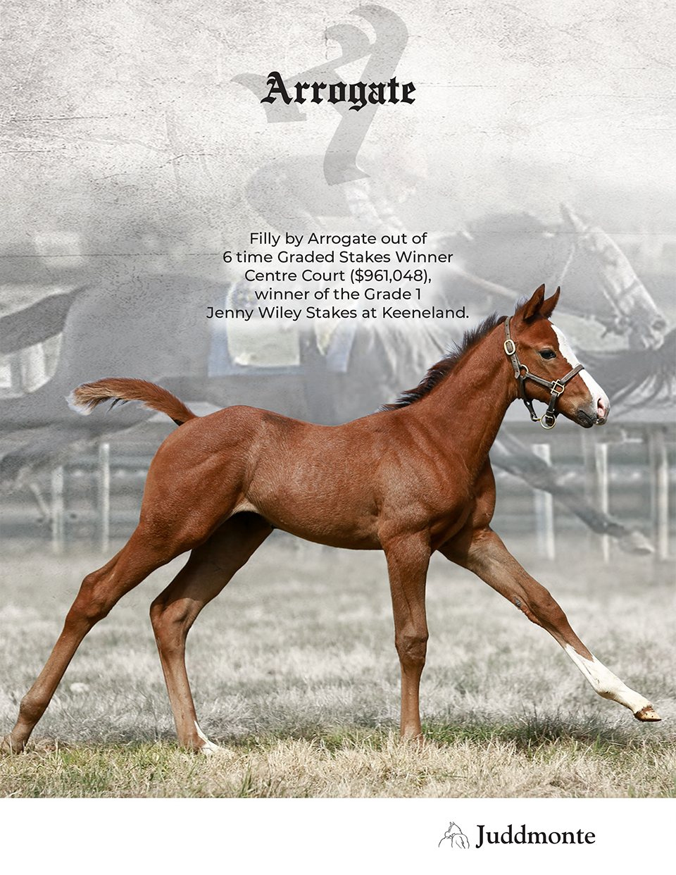 JF_AR_Website_2019Weanlings_CentreCourt_Ad.png
