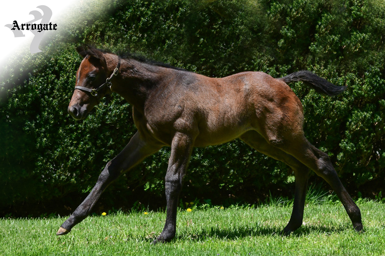 JF_AR_Website_2019Weanlings_MelodysSpirit.png