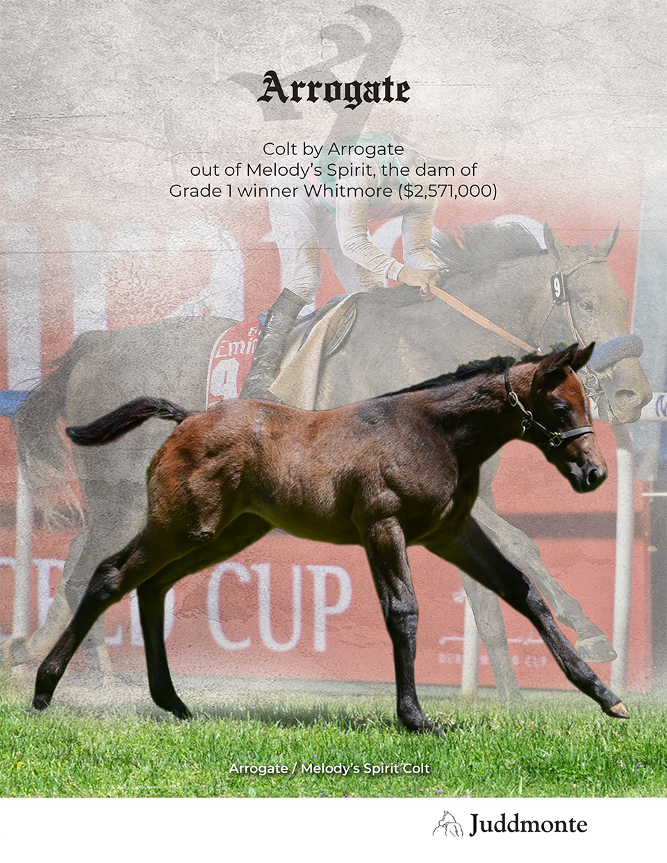JF_AR_Website_2019Weanlings_MelodysSpirit_Ad.png