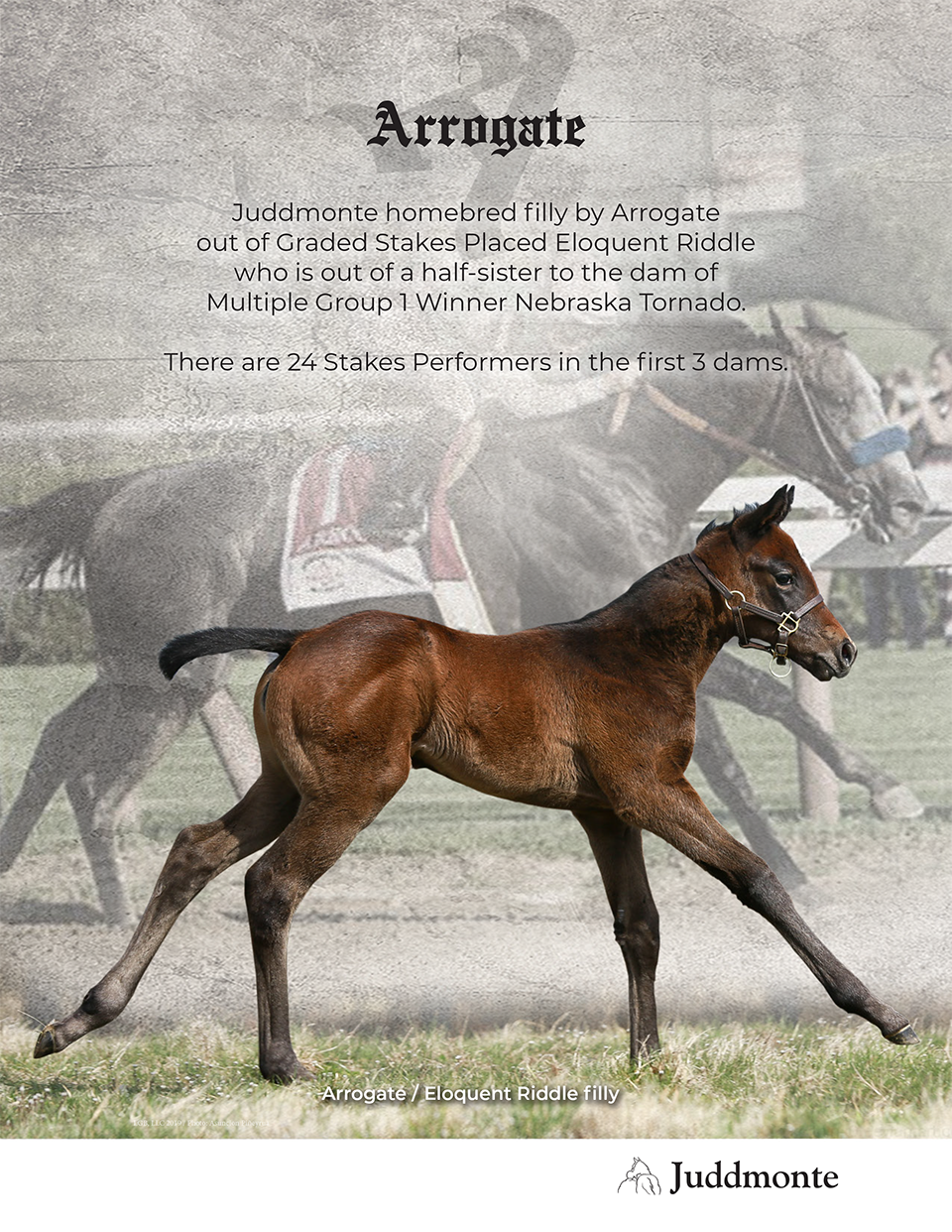 JF_AR_Website_2019Weanlings_EloquentRiddle_Ad.png