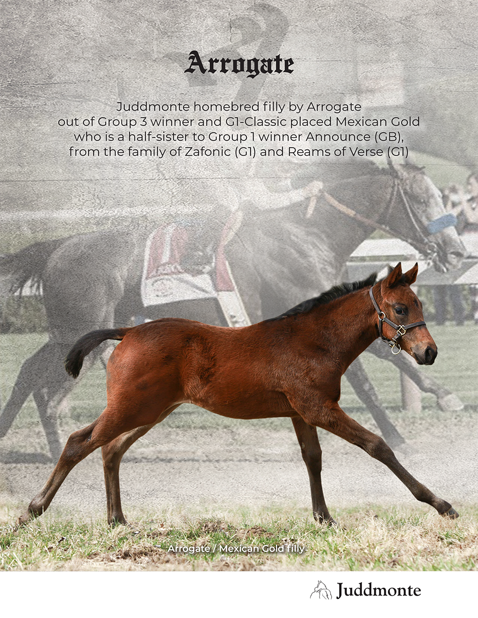 JF_AR_Website_2019Weanlings_MexicanGold_Ad.png
