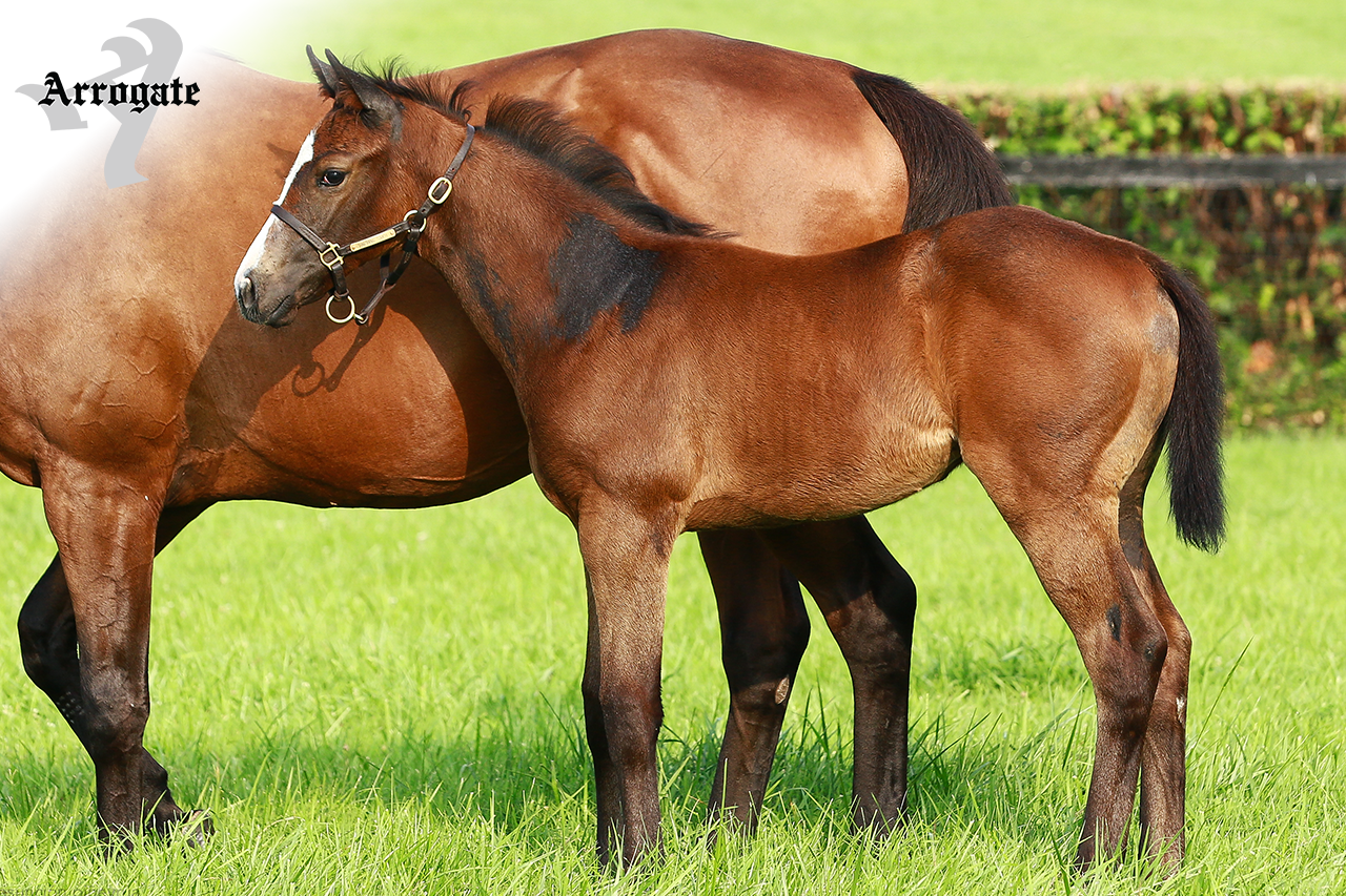 JF_AR_Website_2019Weanlings_SoothingTouch.png