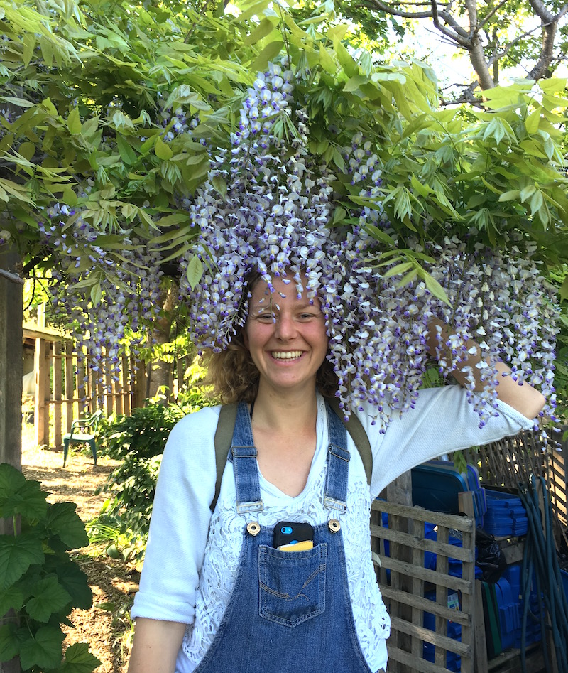 Wisteria Extensions