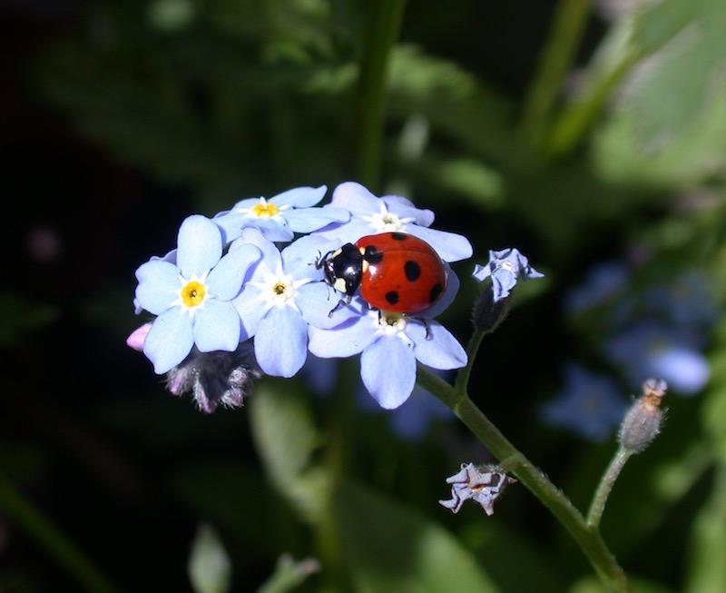 Also Lives in Our Garden