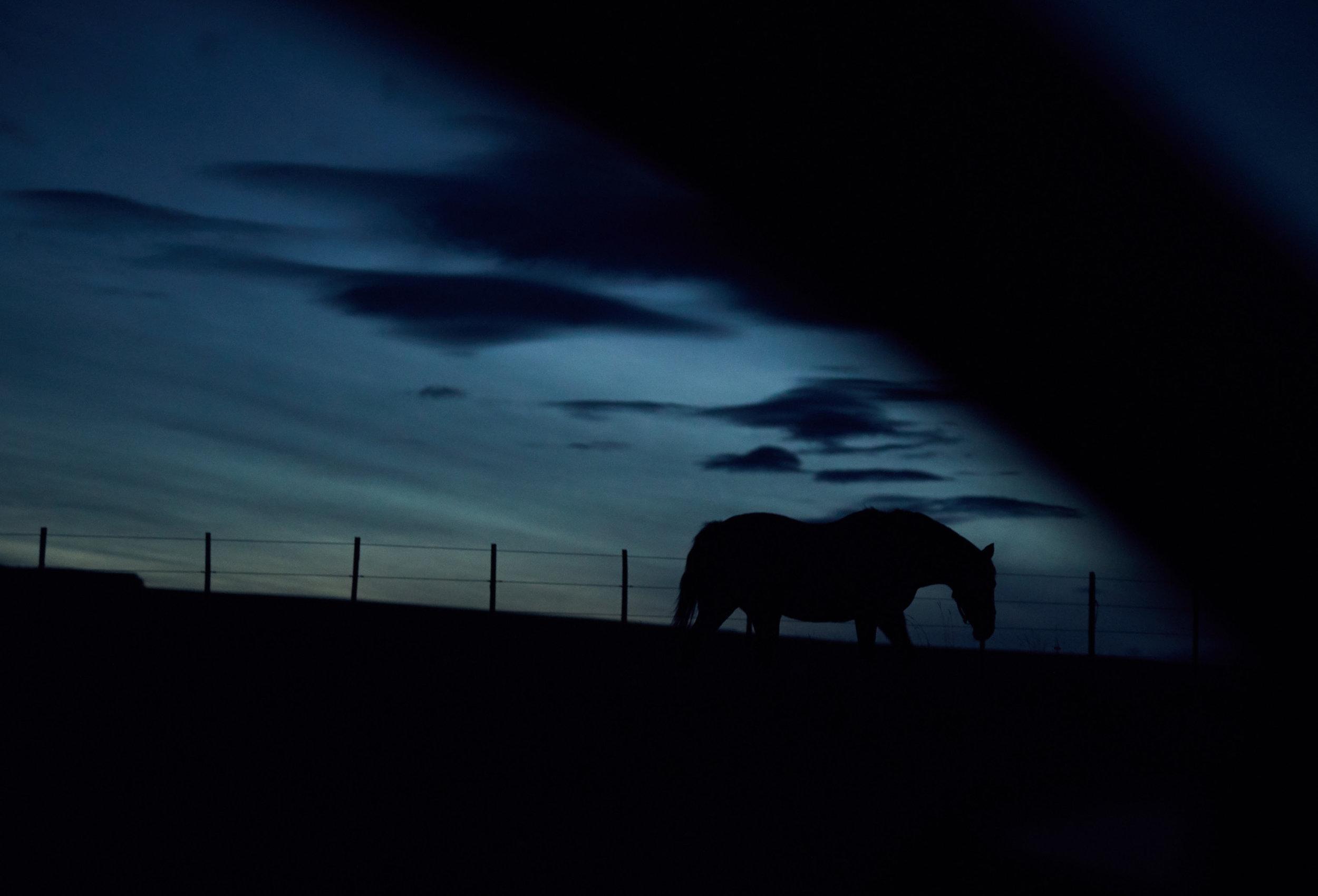 patagoniahorse.jpg