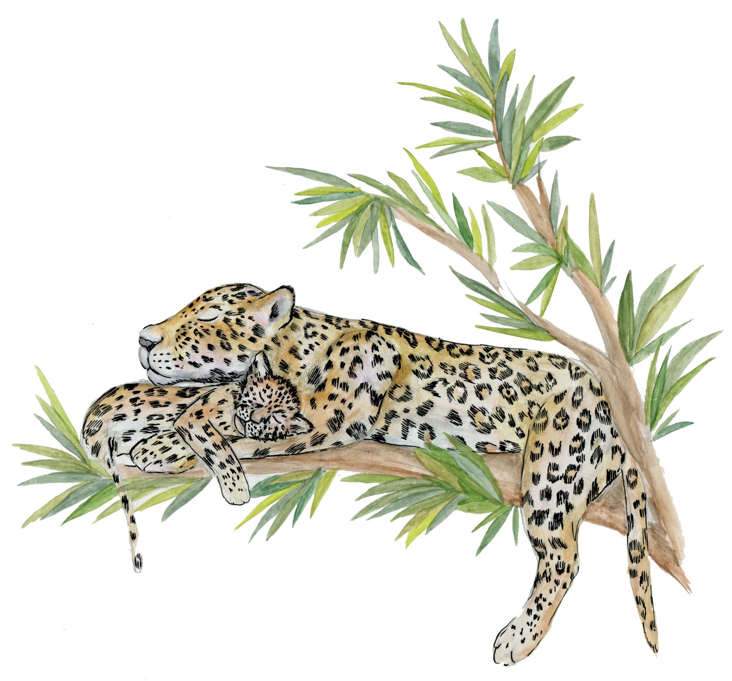 jaguar009.jpg