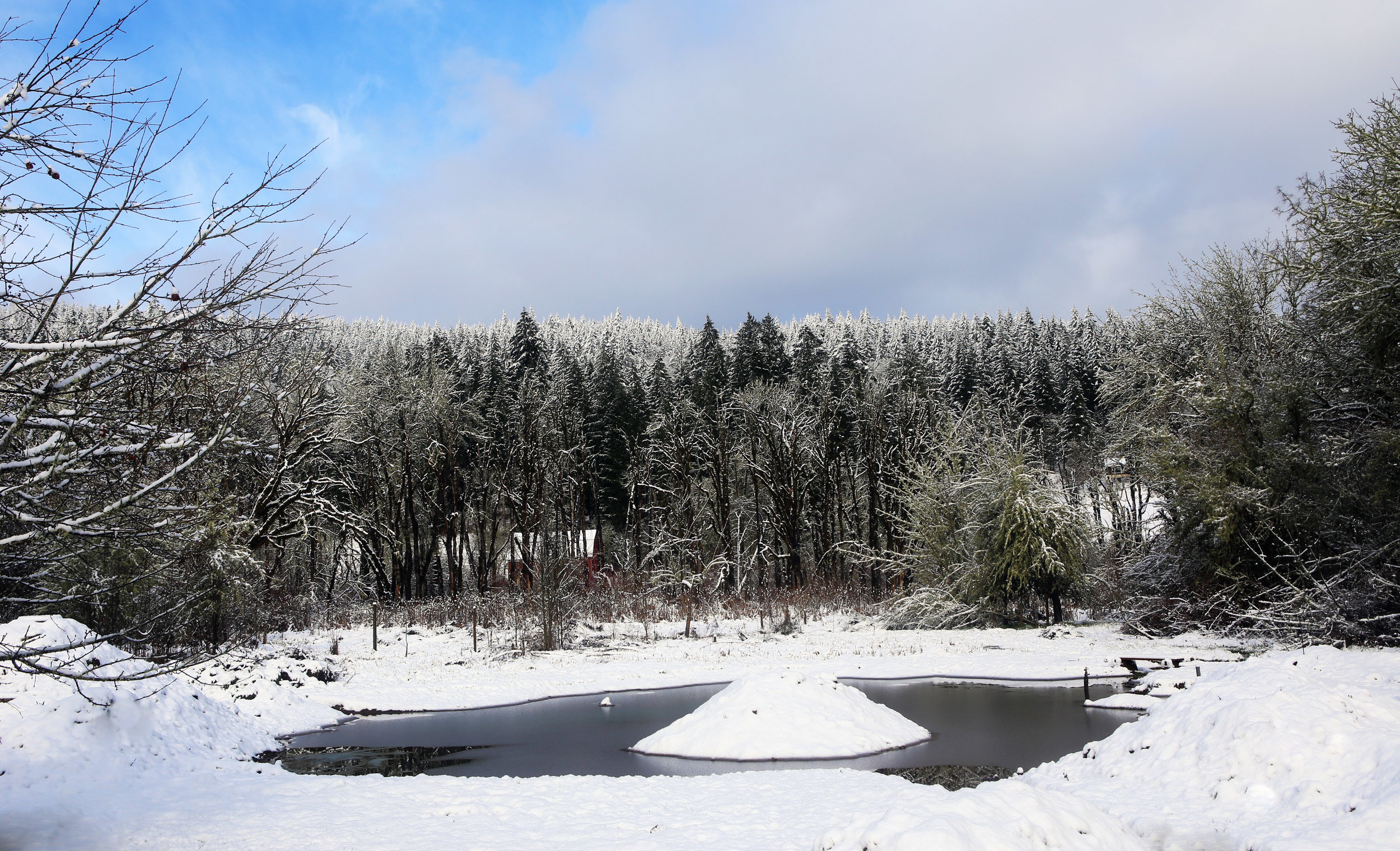 Our Pond on a Snowy Day