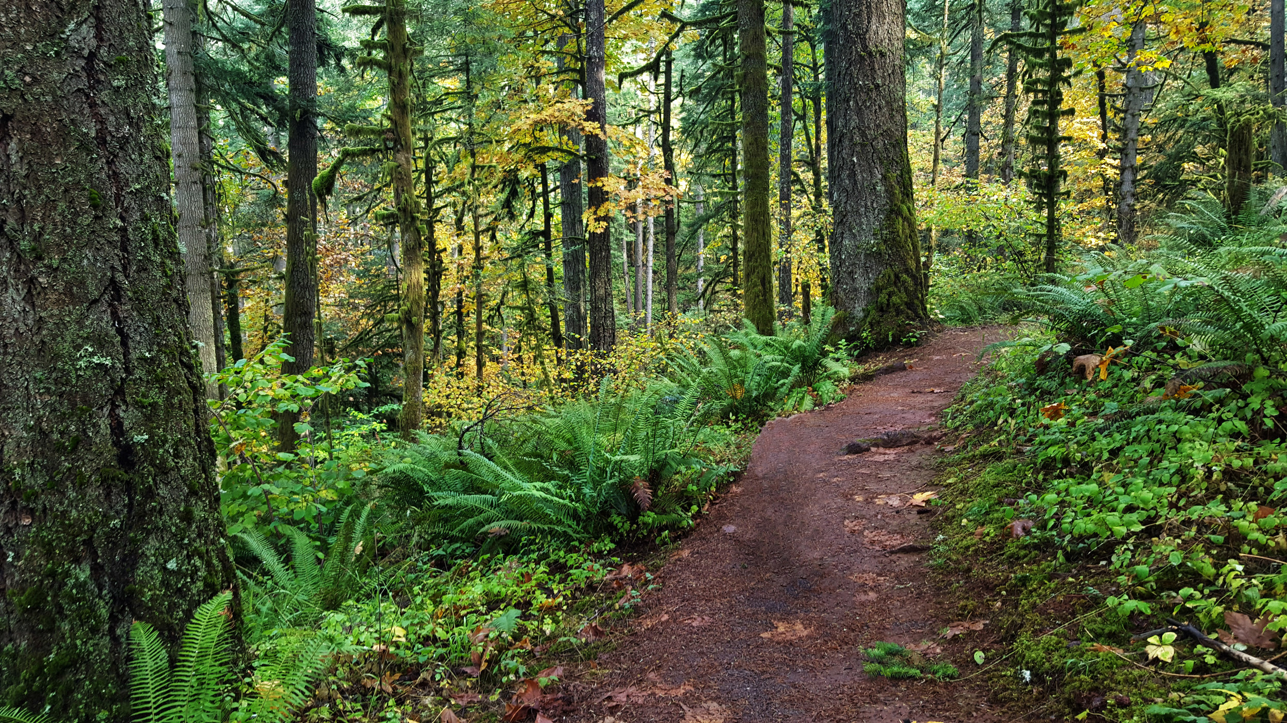 Old growth path.jpg