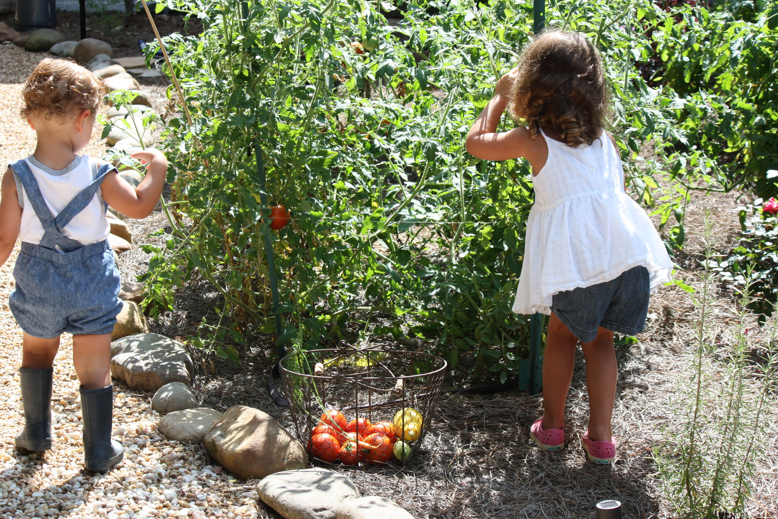 My little pickers this summer.