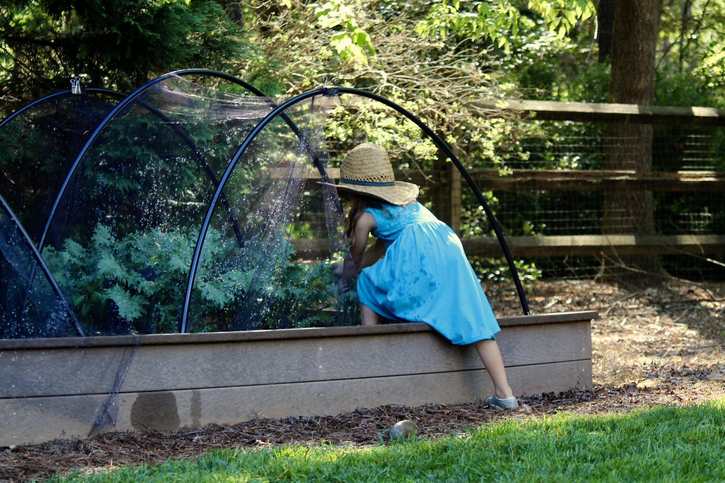 veggiegarden2.jpg
