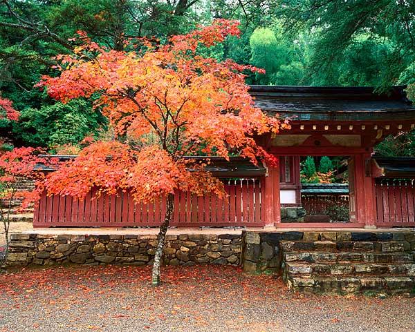 Autumn Friends-Steps Through Antiquity